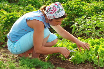 local woman gardening